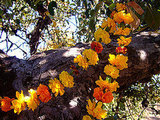 Craft shows you how to make garlands from Fall flowers.
