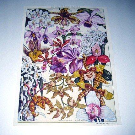 This Large Vintage 1930s Color Plate of Orchids ($11.95) was rescued from an old dictionary and showcases 15 fabulous orchids along with their names. A frame is all it needs!