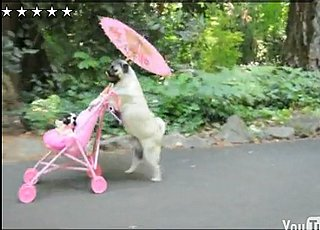 Grab Bag: Pug Takes a Stroll in Portland — With a Stroller