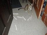 Cats Again?
