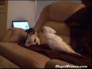 Cockatoo Loves Puppy