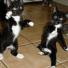 Dancing Kittens