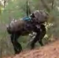 The Boston Dynamics Big Dog
