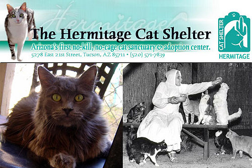 Out and About: Arizona's Hermitage Cat Shelter