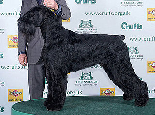 2008 Crufts Winner: Best in Show!