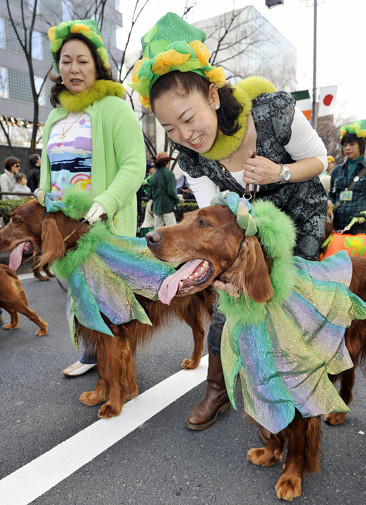 Globetrotters: Tokyo's Parading Irish Setters