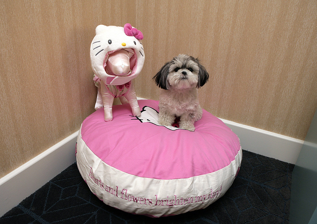Hello Kitty Sweet Suite: New Products for Pets