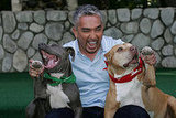Cesar Millan Filming the 100th episode of the 'Dog Whisperer'