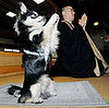 Globetrotters: Conan the Praying Pooch