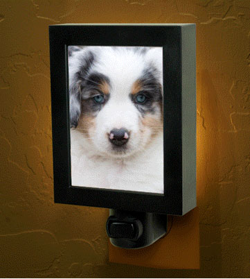 Pet Night Lights