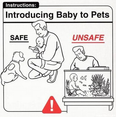 Introducing Baby to Pets