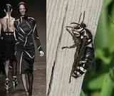 Trend de la Creme For Coutorture:  Entomological Comparisons