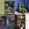 Home Library:  Gardens of New Orleans: Exquisite Excess