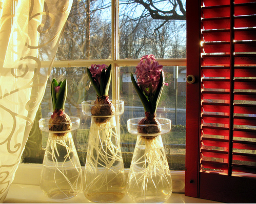 Did You Force Any Bulbs This Winter?