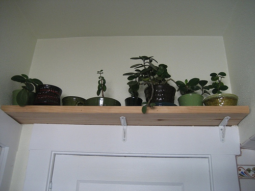 Plants Above the Door