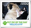 Pet Pics on PetSugar 2009-01-14 09:30:55