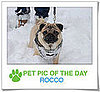 Pet pics on PetSugar 2009-01-26 09:30:31