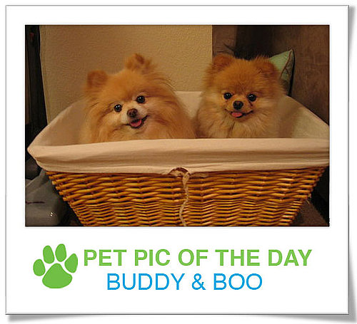 Pet Pics on PetSugar 2009-01-30 09:30:18