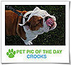 Pet Pics on PetSugar 2009-01-29 09:30:33