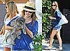 Photos of Rachel Bilson With Her Dog, Heading to Burbank Airport