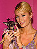 Photo of Paris Hilton and Her Dog; Two of Her Dogs Were Falsely Rumored to Have Been Eaten by a Coyote