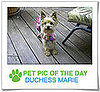 Pet Pics on PetSugar 2008-12-08 09:30:42