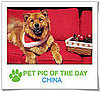 Pet Pics on PetSugar 2008-12-11 09:30:58