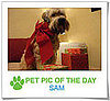 Pet Pics on PetSugar 2008-12-18 09:30:14