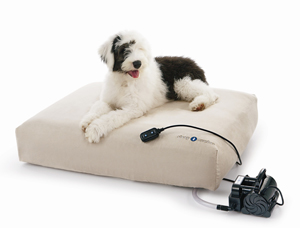 Sugar Shout Out: Win a Bed for Your Pet!