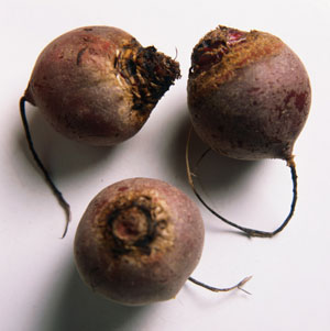 The Connection Between: Beets, Red Urine, and Iron