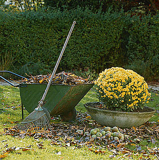 Do You Consider Raking Leaves Exercise?