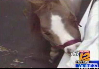Cute Alert: Thumbelina, the World's Smallest Horse, Visits Sick Kids