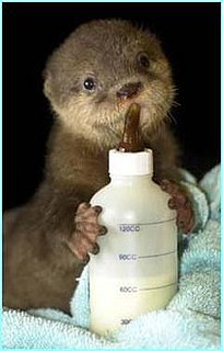 Cute Alert: Baby Otters