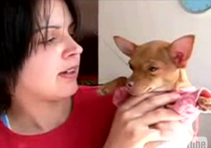 Cute Alert: Singing Chihuahua