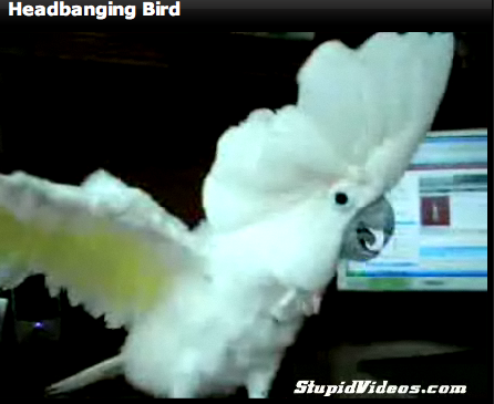 Headbanging Bird