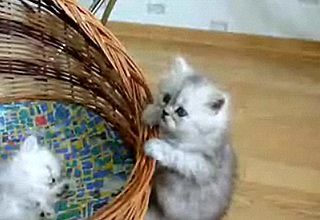 Cute Alert: Kitten vs. Basket