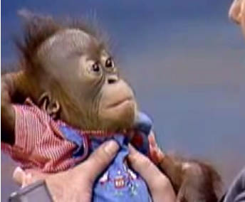 Baby Orangutans on The Tonight Show With Johnny Carson