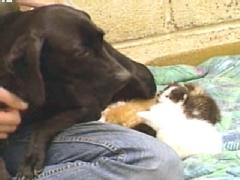 Dog Nurses Kittens Back to Health