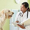 Choosing Your Pet's Veterinarian