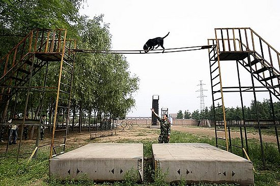 Beijing Rescue Dogs Have a Big Job Ahead