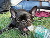 Pet Pics on Petsugar 2008-07-01 08:00:55