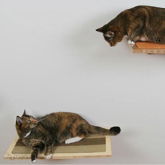 Buddha Cat Habitat