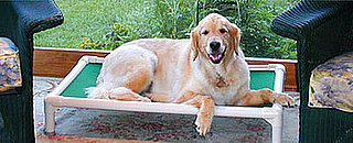 Give Back: Kuranda Dog Beds
