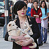 Kelly Osbourne Visits a Beverly Hills Medical Center Carrying Her Unleashed Shiba Inu Puppy