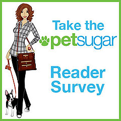 Please Take PetSugar's Survey!