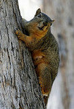 Santa Monica's Squirrel Sitch