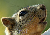 Squirrels in Santa Monica's Palisades Park to Get Birth Control
