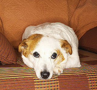 Do Tell: Does Your Pet Have a Fave Spot at Home?