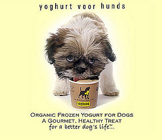 New Product Alert! Yöghund's Latest Flavor