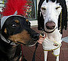 Out and About: Santa Barbara&#039;s Big Dog Parade 